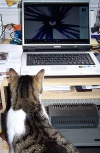 Katze und Computer